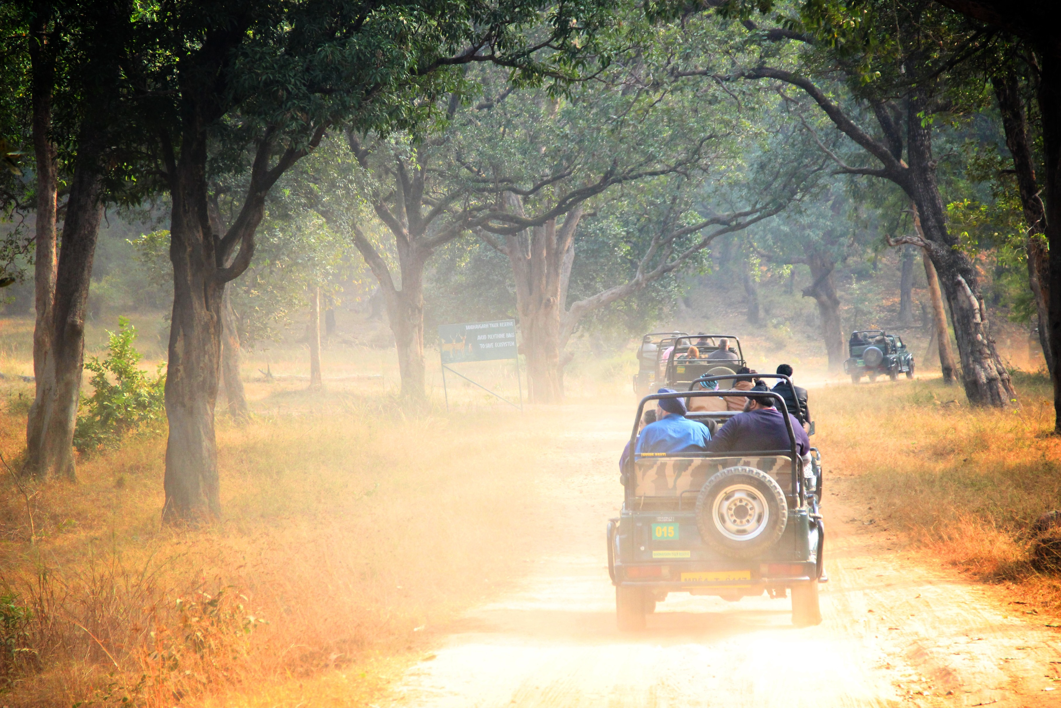 Tadoba Safari